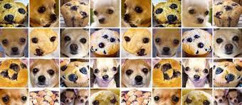 <b>Chihuahua</b> or muffin? My search for the best computer vision API