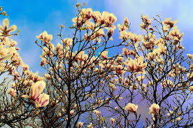 essay on spring season spring season urdu essay mausam bahar ka my favourite season in