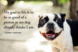 Pet Quotes. QuotesGram