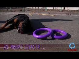 """<b>Puller</b> MAXI"" (<b>Пуллер</b>) <b>тренировочный снаряд</b> для собак крупных ..."