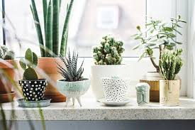 house plants indoor plants bamboo plants lucky bamboo plants potted plants best low light office plants