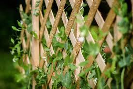 <b>Natural Garden Fencing</b> Ideas - AVS Fencing Supplies