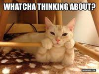 300+ <b>Funny dogs</b> and cats ideas | funny cats, cats, pets