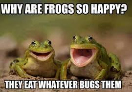 Why are frogs so happy - meme   Funny Dirty Adult Jokes, Memes ... via Relatably.com