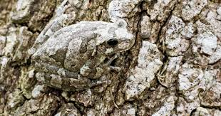 Background artists: nature's most successful <b>camouflage</b> | Cosmos