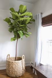 room plants x:  ideas about large indoor plants on pinterest tropical house plants house plants and plants indoor