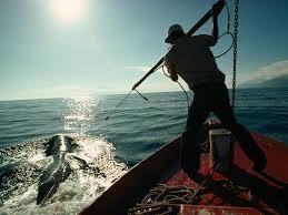 <b>Big</b> Fish: A Brief History of Whaling   National Geographic Society