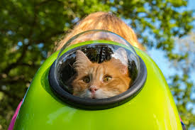Best <b>Cat Backpacks</b> & Carriers [Updated for 2019] | <b>Pet</b> Comments