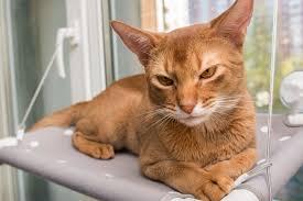 Оконный <b>гамак</b> для кошек GLACAT