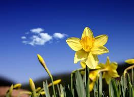 Znalezione obrazy dla zapytania wiosna