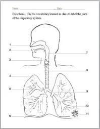 respiratory system labeling diagram diagram pinterest on simple circuit diagram quiz