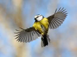 Znalezione obrazy dla zapytania ptaki