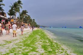 Image result for algae in Boracay