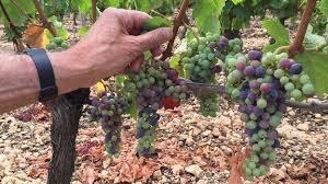「quality of 2015 Bordeaux wine」的圖片搜尋結果