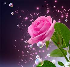 Image result for beautiful roses images