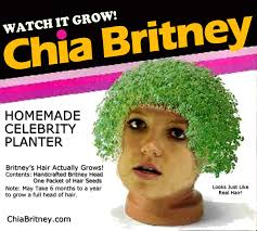Image result for chia pet