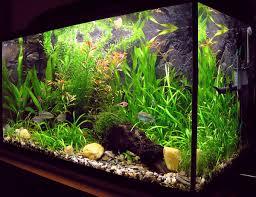 <b>Aquarium</b> - Wikipedia