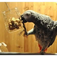 <b>Игрушки</b> для попугаев, птиц, подвешивания, лакомства для ...
