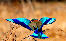 юрий иванников птица счастья