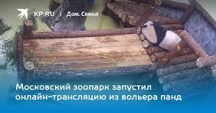 Московский зоопарк запустил онлайн-трансляцию из вольера панд