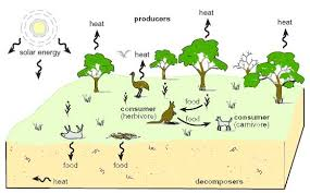 agriculture and the environment   ecosystemsdiagram representing a natural ecosystem