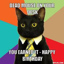 Funny Happy Birthday Cat Meme & Grumpy Cat | Why Are You Stupid? via Relatably.com