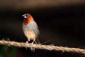 Самые популярные <b>декоративные птицы</b> в мире (фото), топ-10 ...