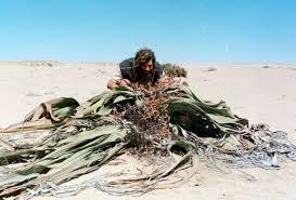 essays on herbal life