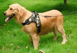 <b>Шлейка для собак</b>: Удобный способ держать питомца на поводу