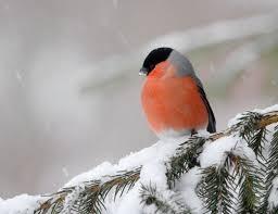 Зимующие птицы Украины. Интересные факты о <b>зимних</b> птицах ...