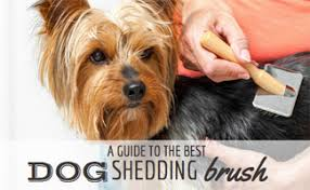 Best <b>Dog</b> Shedding <b>Brush</b>: Shedmonster vs Furminator vs Furgopet ...