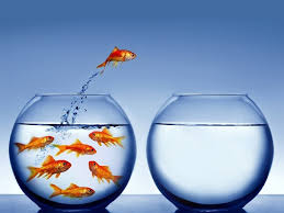 Resultado de imagem para peixes e aquarios