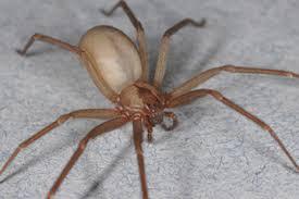 Résultats de recherche d'images pour «spider \»