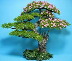 Деревья, <b>Бонсаи</b>. Обсуждение на LiveInternet - Российский ...