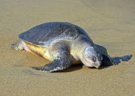 Área protegida (playa ceuta) Images?q=tbn:ANd9GcRj5rz3m7ffhNKol1z1b_nhSXt3JQCnjorxRXBTM3zxo8j52jYoIA