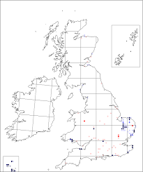 Silene conica | Online Atlas of the British and Irish Flora
