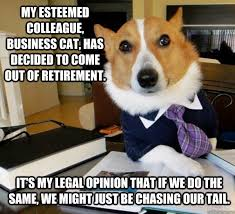 My esteemed colleague, Business Cat, has decided to come out of ... via Relatably.com