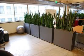 amazing cubicle plants amazing office plants