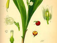 Ботаника: лучшие изображения (716) в 2020 г. | Ботаника ...