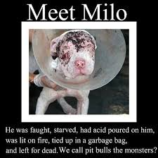 animal cruelty quotes - Google Search | Help the animals | Pinterest