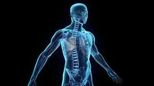 Αποτέλεσμα εικόνας για ανθρώπινο σώμα