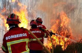 Resultado de imagem para fogos florestais 2016