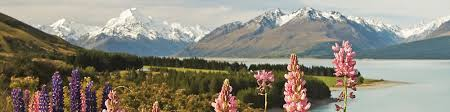 Best Time to Travel to <b>New</b> Zealand