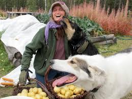 Μπορούμε να δίνουμε πατάτες στον σκύλο μας;