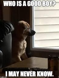 Despondent Dog - Imgflip via Relatably.com