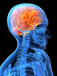 essay on epilepsy it s causes diagnosis and treatment