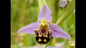 Цветок орхидея. Необычные и редкие растения, цветы орхидеи ...