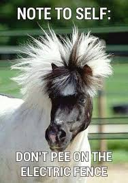 Now for some Sunday funnies - horsey style - Habitat For Horses ... via Relatably.com
