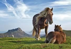 Resultado de imagen para horses