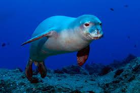 Image result for Seals